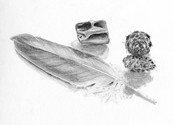 Eagle Feather Pencil Drawing Eagle feather drawingEagle Feather Pencil Drawing